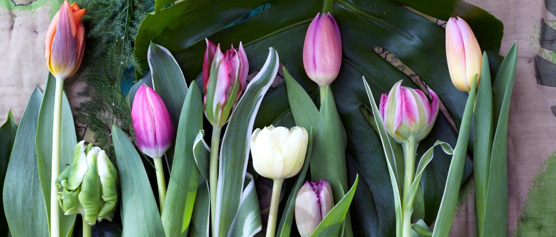 Koop ook tulpen bij Pluk n Bloom